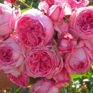 Роза Молинар