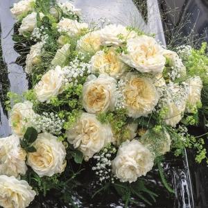 Мемориал роуз (фриденслихт)